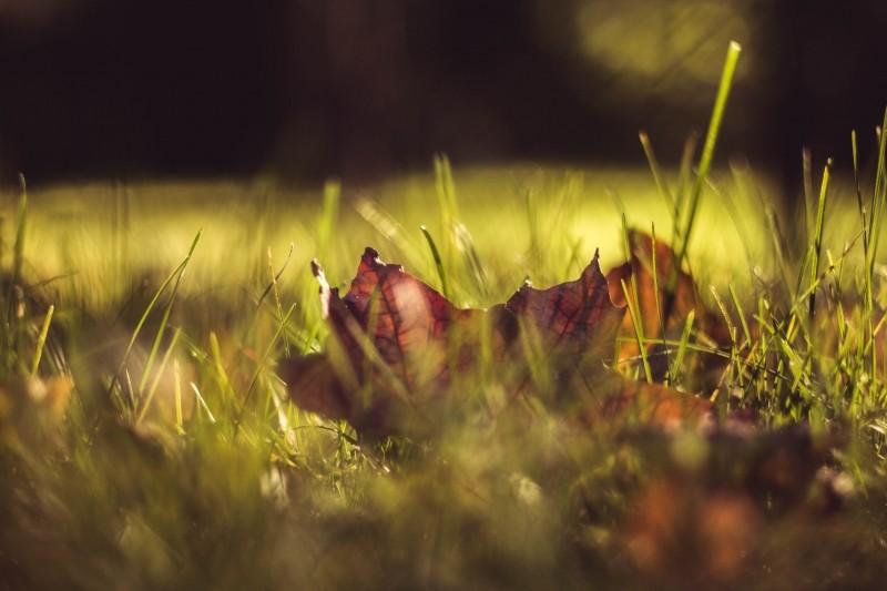 liść na trawie