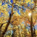 Co dzieje się z Twoim organizmem (i trądzikiem) jesienią